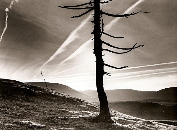 DEAD TREE, Cefn Coch, Cwmystwyth, Ceredigion 2009 - THE WELSH LANDSCAPE - MOSTLY IN CEREDIGION