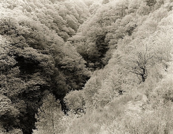 ANCIENT WOODLAND, Ysbyty Cynfyn, Ceredigion 2011 - THE WELSH LANDSCAPE - MOSTLY IN CEREDIGION