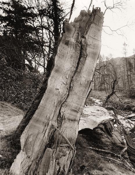 BROKEN TREE, Hafod, Pontrhydygroes, Ceredigion 2012 - THE WELSH LANDSCAPE