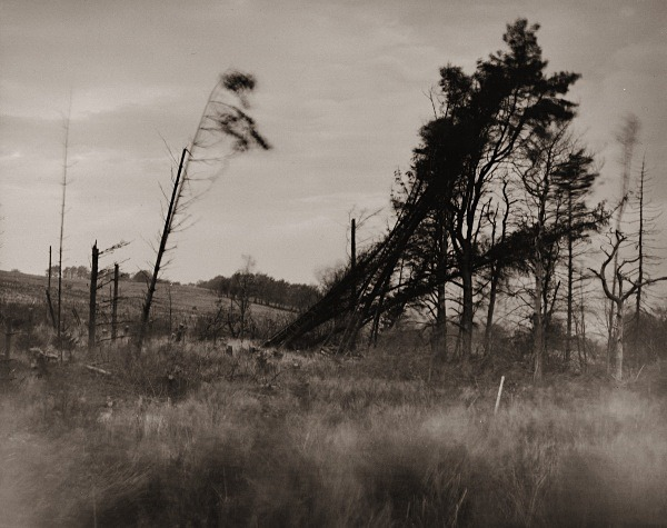 WINDY TREES, Llanddewi-brefi, Ceredigion 2015 - THE WELSH LANDSCAPE