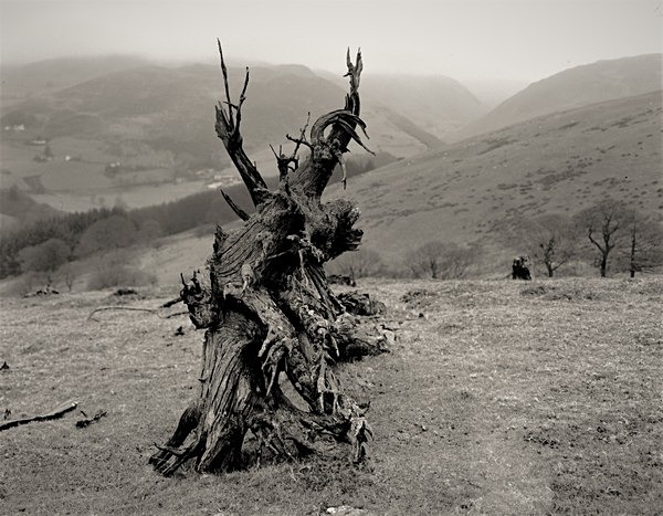 Notes on DEAD TREE ROOTS, Cefn Coch, Cwmystwyth, Ceredigion 2003 - THE WELSH LANDSCAPE - MOSTLY IN CEREDIGION