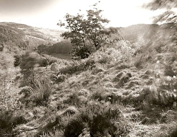 TREES ON HAFOD, Pontrhydygroes, Ceredigion 2010 - THE WELSH LANDSCAPE