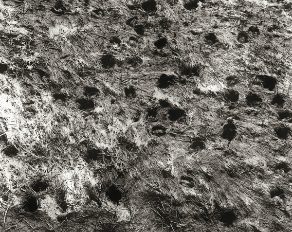 MUD AT TEIFI POOLS, Ceredigion 1999 - THE WELSH LANDSCAPE