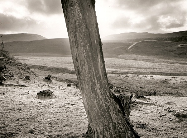 DEAD TREE, Cefn Coch, Cwmystwyth, Ceredigion 1996 - THE WELSH LANDSCAPE - MOSTLY IN CEREDIGION