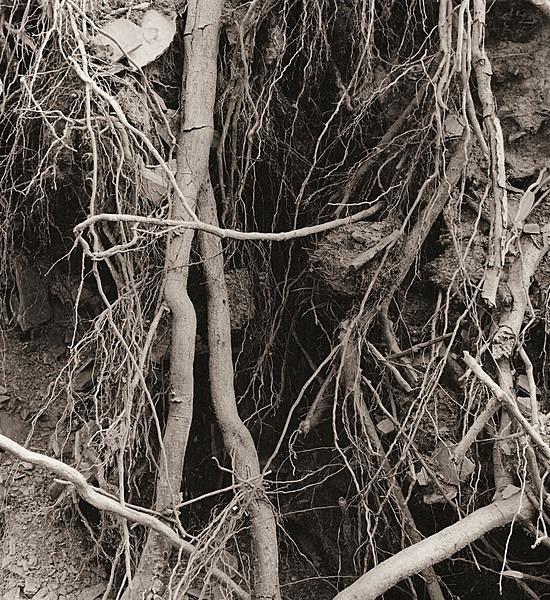 HAFOD, Ceredigion 1991 - THE WELSH LANDSCAPE - MOSTLY IN CEREDIGION