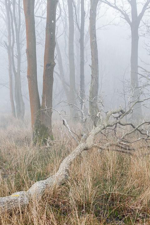 The Fallen - Woodland