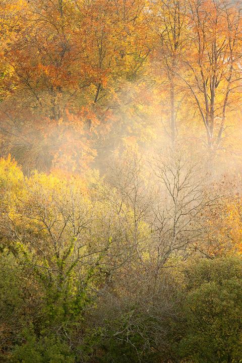 Autumn Glory - Woodland