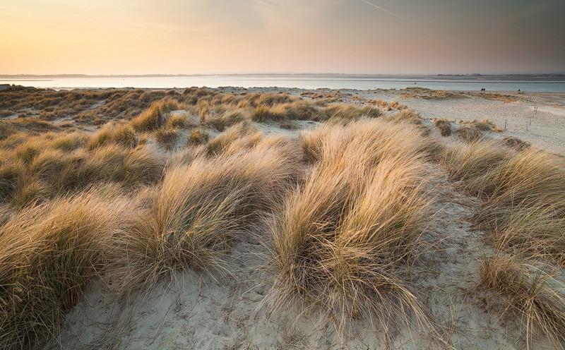 Golden dunes, West Wittering - Coast