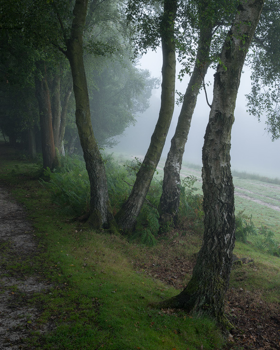 Trees in the mist, Ashdown Forest - Woodland