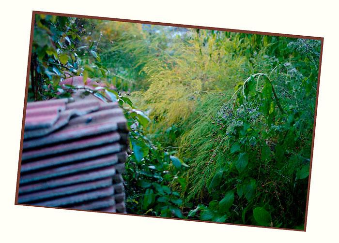 Kibuvitsi's Garden 4 - Parks and Gardens