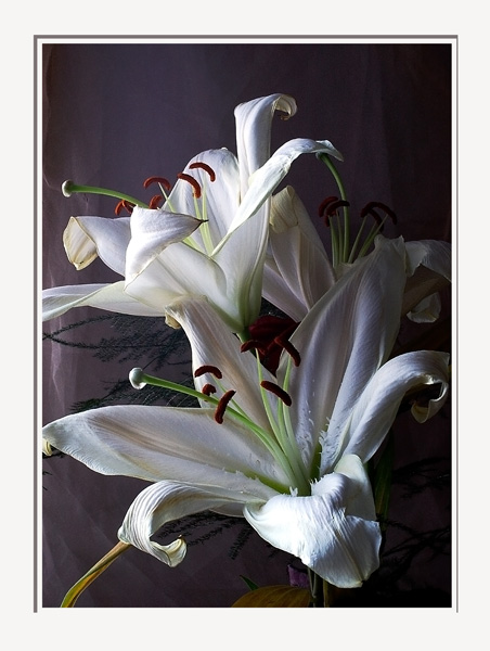 Bouquet of Lilium orientale -hybrids - Still Life