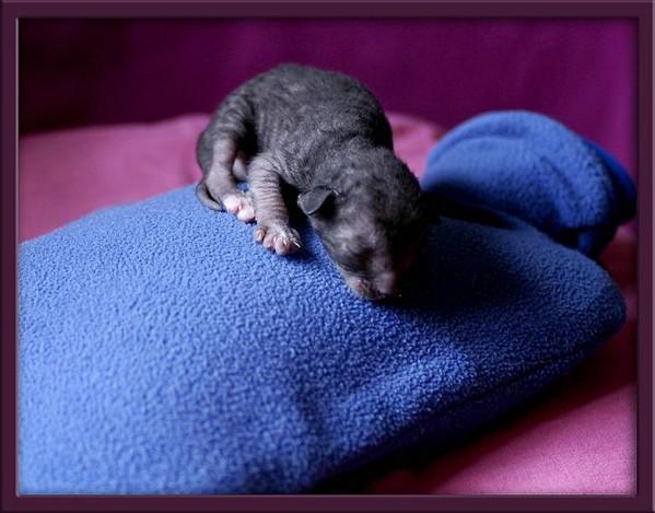 5 days - b/w girl - Linssi's kittens