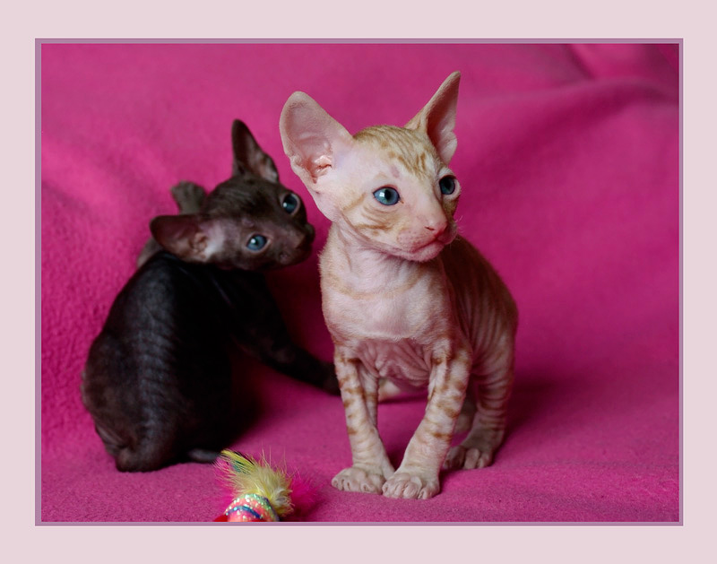 Coco 3 weeks - 2 - Mimmi's kittens