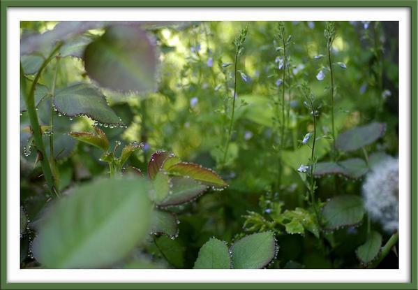 2 - The Secret Garden