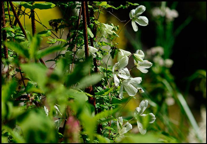 Linnea's Garden 8 - Parks and Gardens