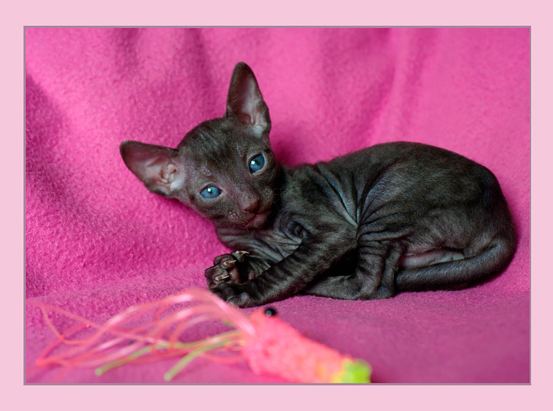 Coco 3 weeks - 1 - Mimmi's kittens