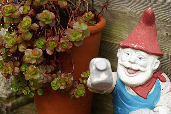 - The Many Faces of a Rushden Garden