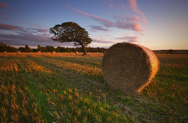 For the Summer - Wirral Landscapes