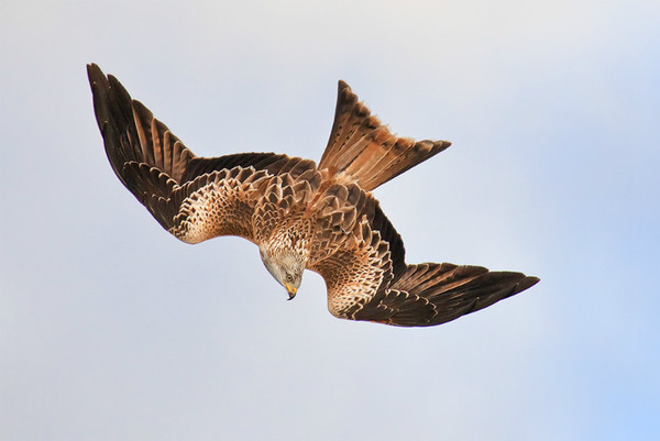 Barcud 3 - Natur Wyllt / Wildlife