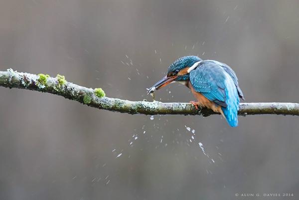Glas Y Dorlan 1 - Natur Wyllt / Wildlife