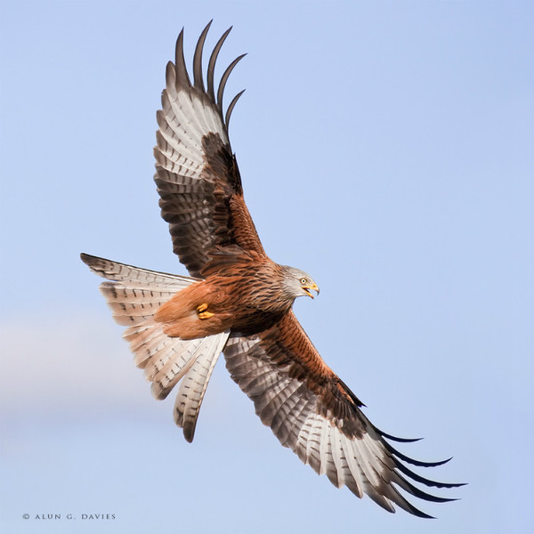 Barcud 2 - Natur Wyllt / Wildlife
