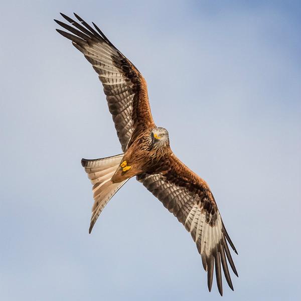 Barcud 1 - Natur Wyllt / Wildlife