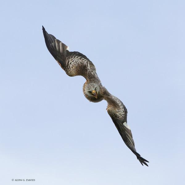 Barcud 4 - Natur Wyllt / Wildlife