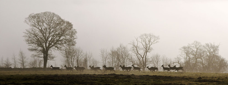 Running Deer Stanton Moor - Sheep  and other furry animals