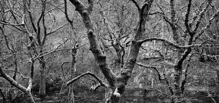 Cressbrook Dale Trees and Moss - Black and White