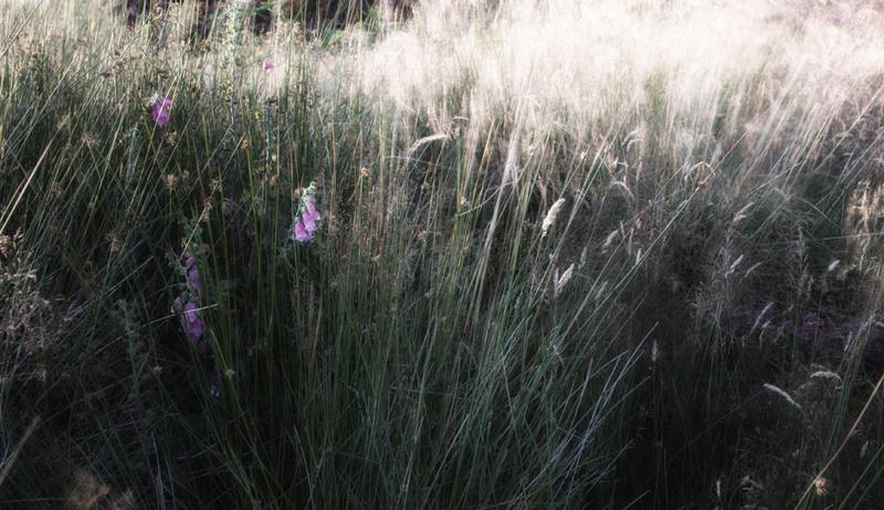 Grass 5 - Grass