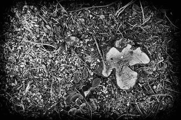 Tree stump - Abstract landscapes