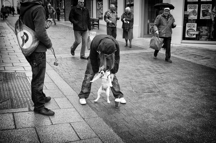 Dressing the dog!! - Street Photography