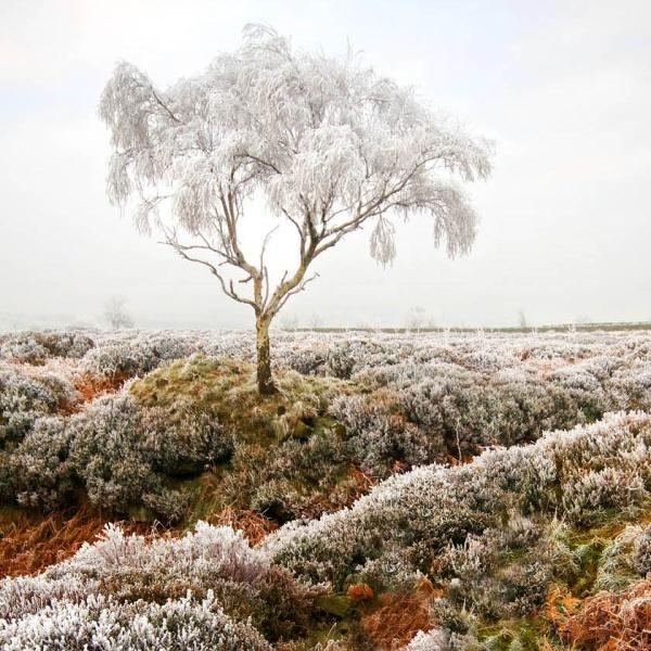 Beeley Moor Tree Frost 1 - Winter Landscapes
