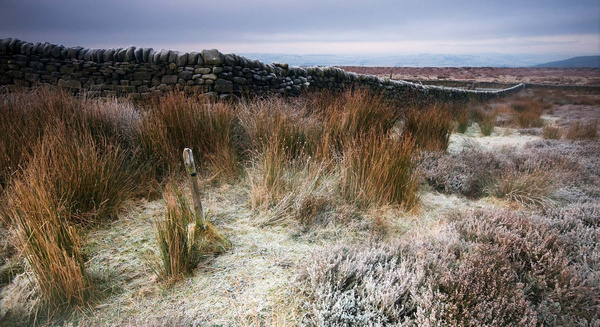 Beeley Moor Frosty post - Winter Landscapes