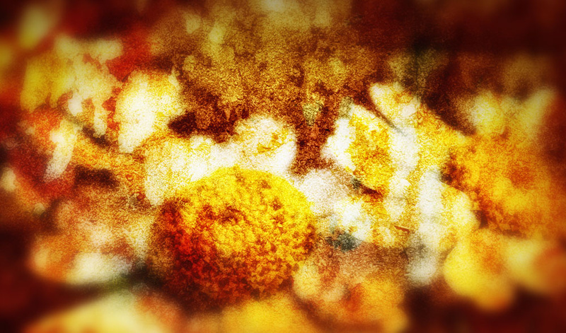 Flower Abstract - Abstract landscapes
