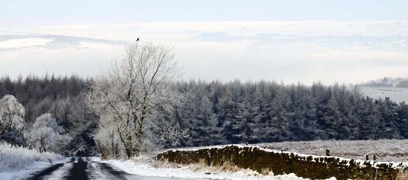 Beeley Moor Lone Bird - Winter Landscapes