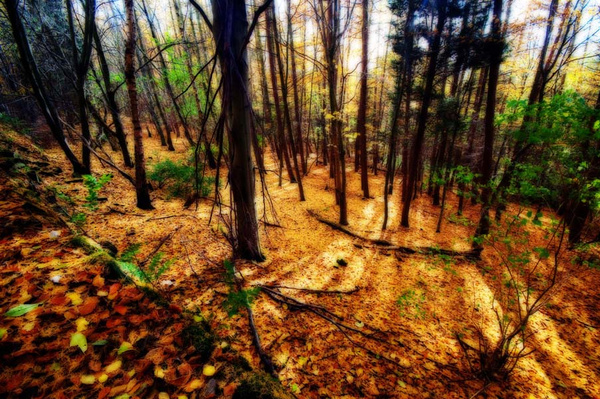 Trees - Visual Imagery