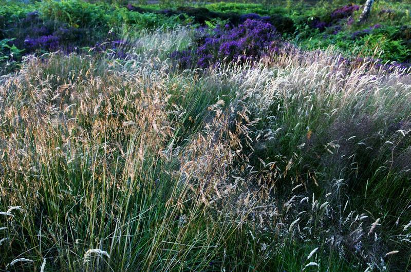 Grass 6 - Grass