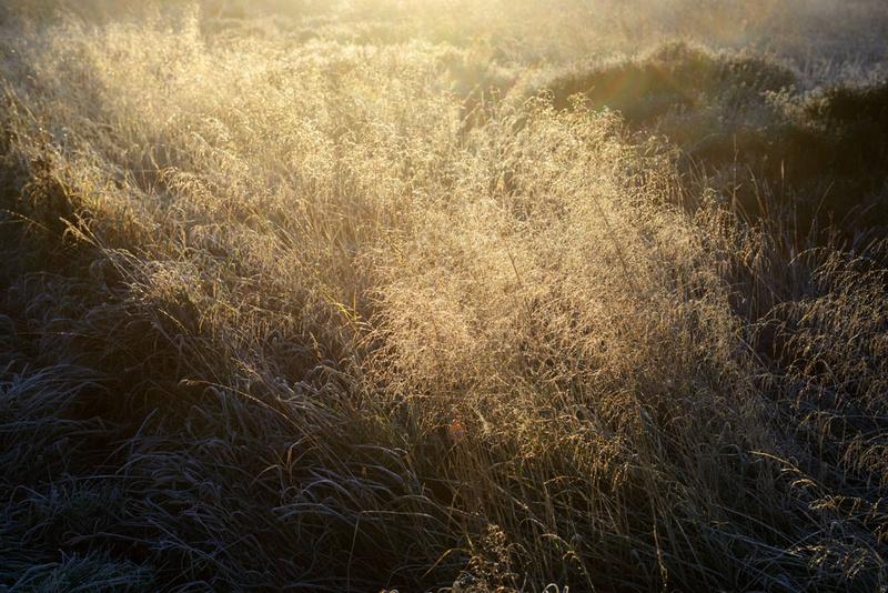 Grass 1 - Grass