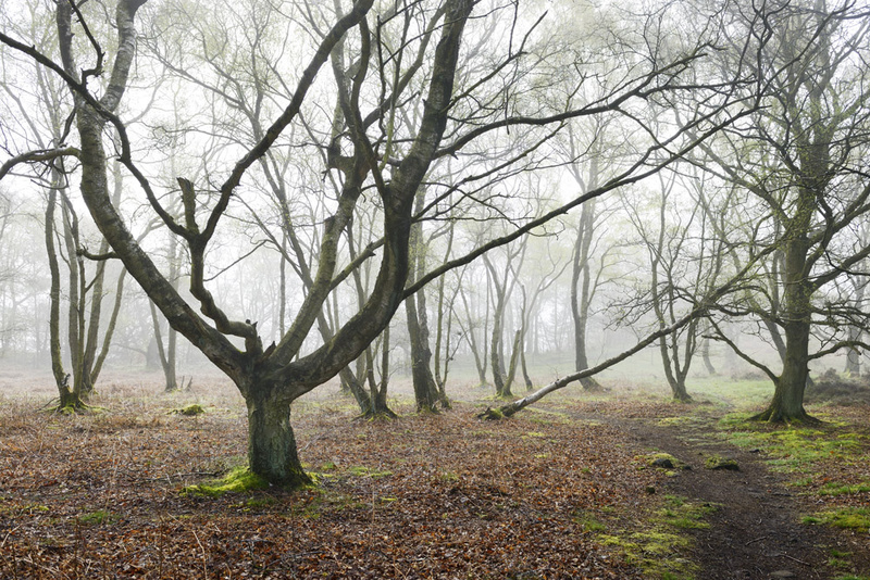 - Stanton Moor Landscapes