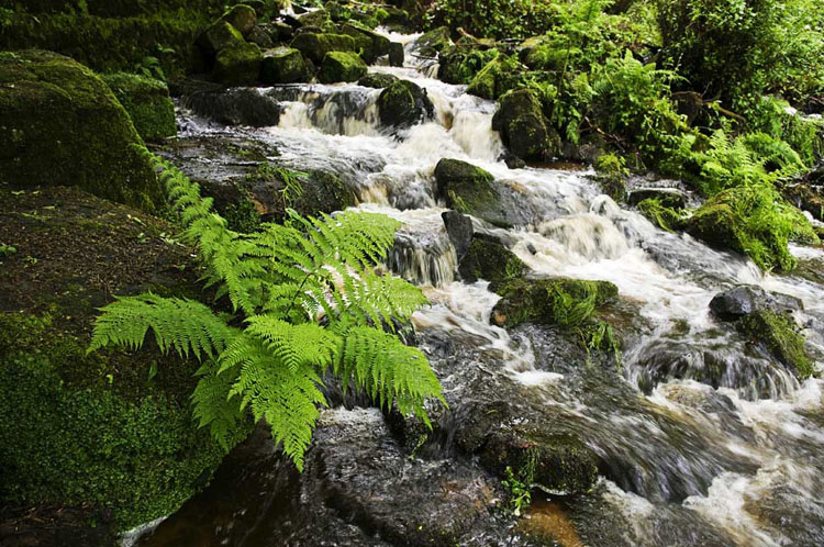 Lumsdale Matlock Fern - Landscapes