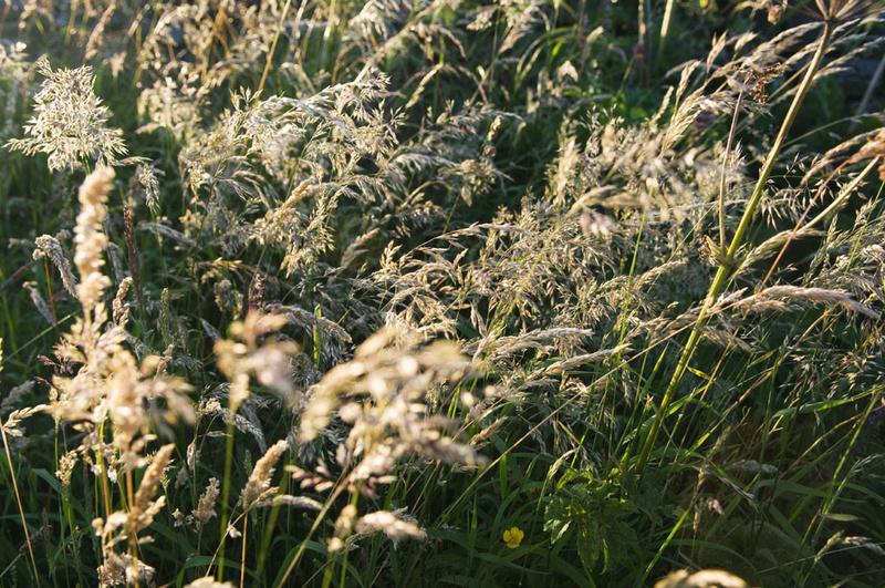 Grass 7 - Grass