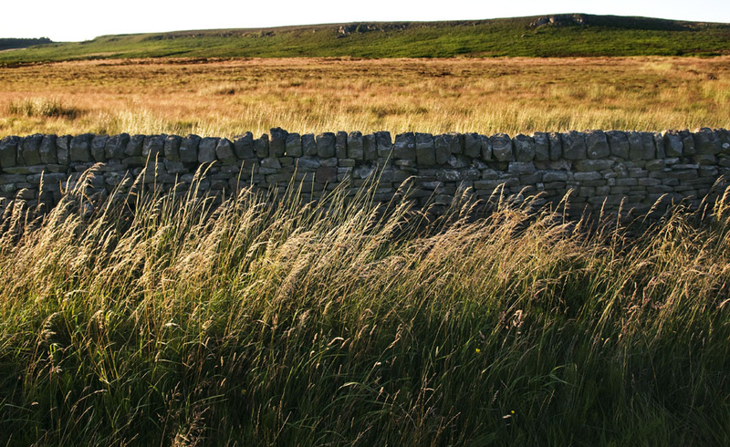 Beeley Moor Lines and Textures - Beeley Moor
