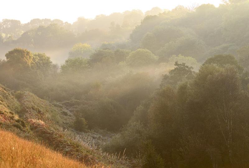 Brynberian Autumn Mist - Valley Project