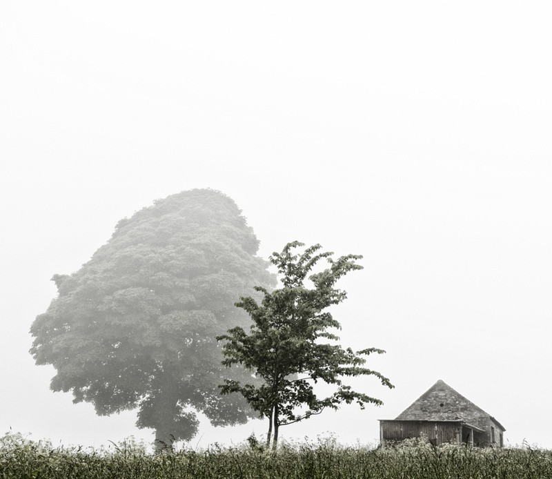 Trees and Barn - Visual Imagery