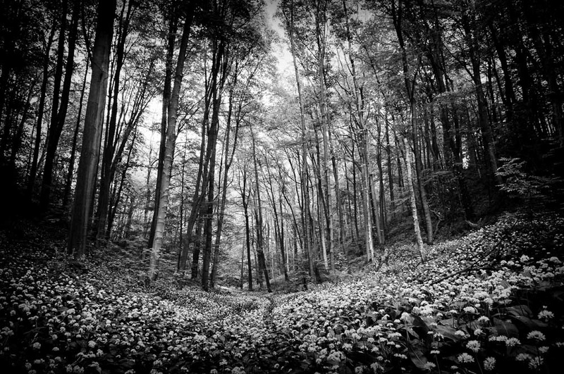 Trees and Ransoms - Black and White