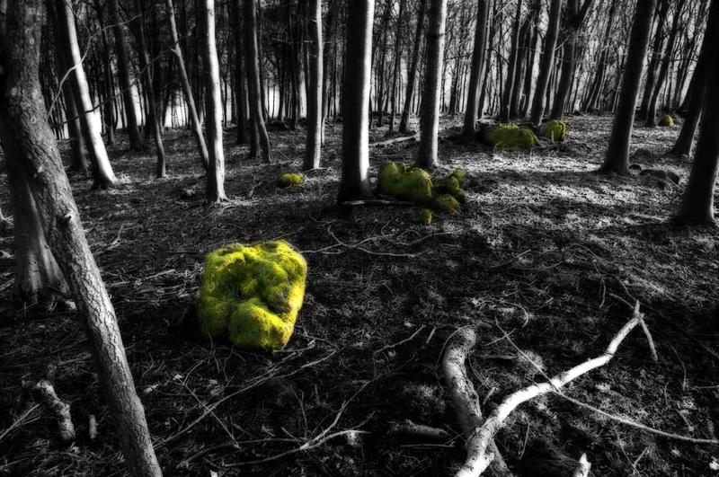 Green Rocks - Visual Imagery