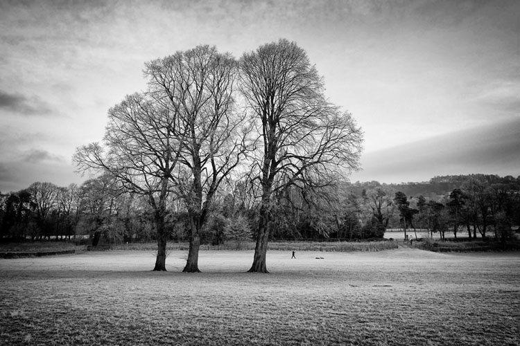 Three Trees - Black and White
