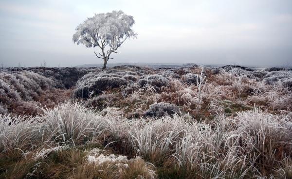 Beeley Moor Tree Frost 4 - Winter Landscapes
