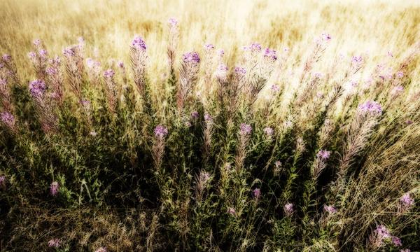 Grass 8 - Grass